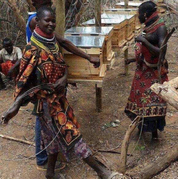 Maasai Beekeeping Women —Innov8 Africa