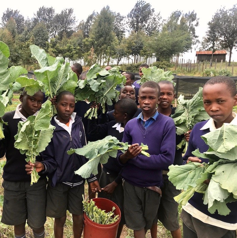 African students with harvested kales — food security program— Innov8 Africa