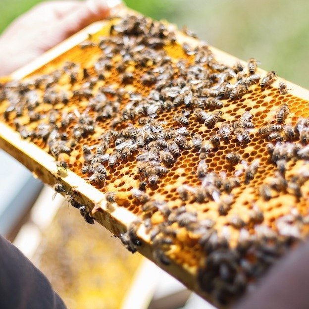 Beekeeping beehive frame with beeswax and bees — Innov8 Africa