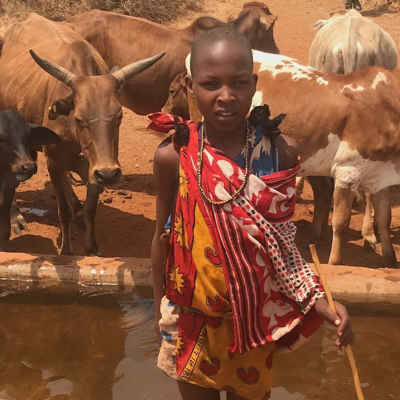 young girl with cattle in Kenya-livestock banking program-Innov8 Africa