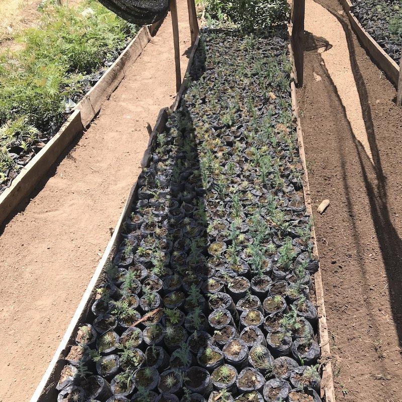 Seedlings in Tree nursery-Reforestation Module-Innov8 Africa