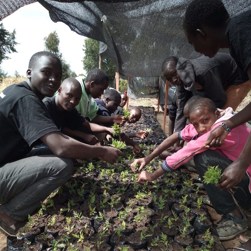 African Students in a tree nursery-Reforestation module-Innov8 Africa